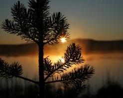 midnight-sun1